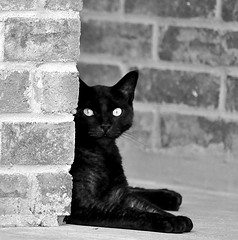Black cat and Jasleen Kaur